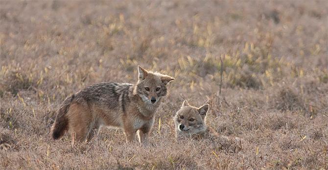 Pohjois-Intia 2010: muut eläimet