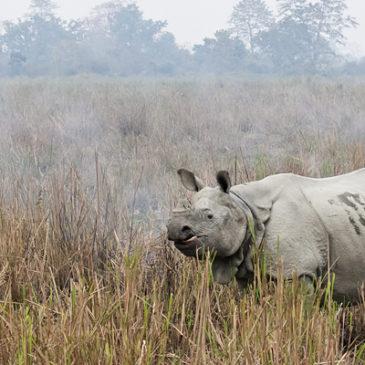 Koillis- ja Keski-Intia 2012