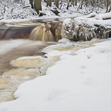 Talven tuloa Alakestilän Arboretumissa