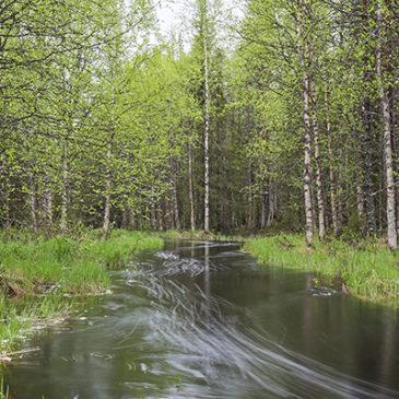 Sallan pieniä erämaajokia