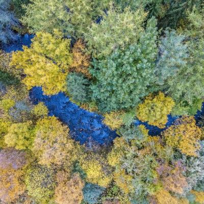Ruskaa Limingan arboretumin alueella