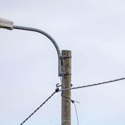 Hiiripöllö Limingassa