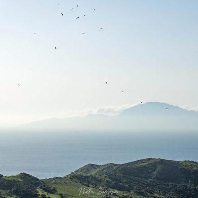 Gibraltarin salmen petolintumuuttoa