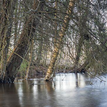 Liminganjoki tulvii – kuvausretki arboretumiin