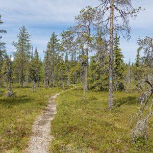 Mätäslammen länsipuolella reitti kulki metsien ja soiden rajapinnassa