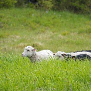 Lampailla riitti tutkittavaa uudessa ympäristössä