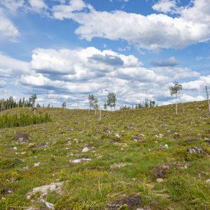 Reitti laskeutuu Ukonvaaran hakkuiden läpi kohti kansallispuistoa