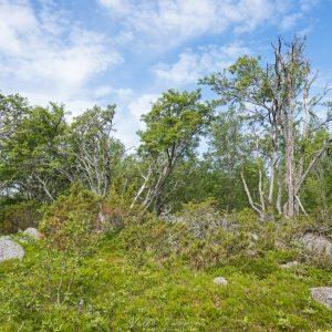 Niemenkärkien metsää